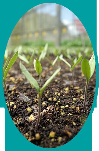 soil.png